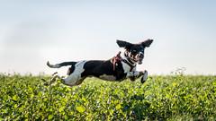 Jumping Jack (C.A.Photogenics) Tags: