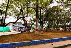 photo - Patriotic Trees (Jassy-50) Tags: plaza tree square photo colombia piazza cartagena