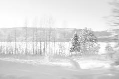 Lillehammer, Norway. (SinoLaZZeR) Tags: blackandwhite bw norway norge blackwhite fuji norwegen lillehammer finepix fujifilm monochrom minimalism schwarzweiss       x100