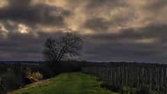 Landscape (Netsrak) Tags: trees cloud tree weather clouds rural landscape path wolke wolken plantation apples drama landschaft bume baum singletree weg plantage pfel