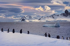 Got to see lots of fantastic lenticular clouds during my time in Antarctica. Even the Penguins enjoy awesome scenery. #antarctica #penguins #winterphotography #winter#weather #clouds (kevin mcneal) Tags: square squareformat iphoneography instagramapp uploaded:by=instagram