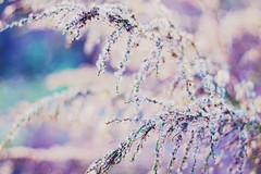 Reawakening (Melody K Photography) Tags: flowers plant nature canon photography 50mm bokeh outdoor pastel depthoffield