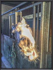 Having Fun (gill4kleuren - 11 ml views) Tags: horse white me beauty fun outside happy riding gill anisa paard pret arabier