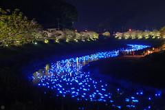 20160305-DSC_2310.jpg (d3_plus) Tags: street sea sky plant flower nature japan spring nikon scenery nightshot cloudy bloom  cherryblossom  sakura lightup nightview 28105mmf3545d nikkor    shizuoka    izu   28105   rapeblossom    28105mm  zoomlense  minamiizu    kawazuzakura    28105mmf3545 d700 281053545  nikond700 shimokamo aiafzoomnikkor28105mmf3545d nightcherryblossom 28105mmf3545af    southcherryblossomandrapeblossomfestival aiafnikkor28105mmf3545d shootingstarsandsakurainnight sakurainnight