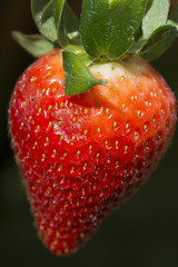 Yummy !! Eat me (magicpicture.co.uk) Tags: red fruit strawberry marco nikond40 macrolife macrodreams nikond5200 dilpreetsohanpal wwwmagicpicturecouk