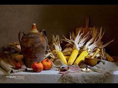 BODEGN CON MAZ (Miguel Calleja) Tags: stilllife corn pomegranate bodegn granada grenade naturemorte naturamorta maz mas