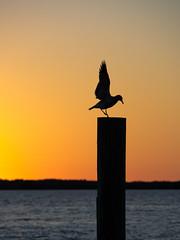 Everglades Sunset (atralux) Tags: usa florida wildlife everglades evergladesnationalpark southeast
