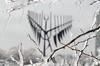 DSC_0609 (Joey Olekas) Tags: winter sunset snow macro tree ice nature fence nikon dreamcatcher nikond7000