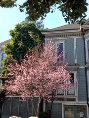 Surprised by Spring (JoeGarity) Tags: trees spring blooming plumblossoms thehaight
