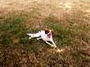 it's too hot....i need to rest (Bambola 2012) Tags: park summer parco hot verde green grass cane estate canine erba tired tennisball pas animale gundog brittanyspaniel caldo trava stanco ljeto zeleno stanchezza umor ljubimac vrućina canedacaccia lovački