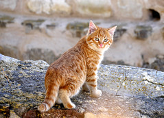 P1070338_ (Sandra Preussel) Tags: orange baby cute cars nature beautiful animal animals cat fur ginger eyes furry kitten kitty babycat