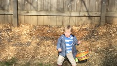 "Paul hunts for Easter eggs in the backyard • <a style=""font-size:0.8em;"" href=""http://www.flickr.com/photos/109120354@N07/26019355634/"" target=""_blank"">View on Flickr</a>"