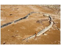 IMG_7405 (Schamsz) Tags: shore caspiansea goldensand alat lt canalisationpipe