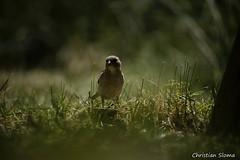 _DSC0386 (chris30300) Tags: france heron de pont parc oiseau camargue gau saintesmariesdelamer flamant provencealpesctedazur ornithologique