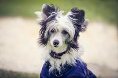 Bonsai (dinahlorraine) Tags: dog pet pets dogs hund hunde dogwalk herten hundefotografie
