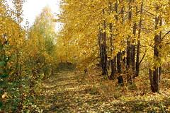 DSC_6023 (Rustam Bikbov) Tags: autumn september 2012    sverdlovskoblast