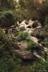 Aguas del deshielo. (Jose HL) Tags: rio river agua andalucia granada helechos guejarsierra deshielo riosanjuan