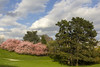 Park, Kassel (cmerkat) Tags: spring cherryblossom kirschbluete naturelandscape