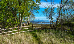Summer coming (Tony Tomlin) Tags: canada britishcolumbia crescentbeach blackiespit southsurrey crescentbeachbc