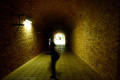 Sarushima (tokyobogue) Tags: sea japan wall island nikon tunnel historic artillery fortress kanagawa tokyobay yokosuka gunbattery sarushima saruisland nikond7100
