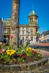 Rheinberg (fotos_by_toddi) Tags: flowers sky flower rot sony blumen alpha blume wesel a77 nordrhein westphalen voerde rheinberg sonyalpha77 fotosbytoddi