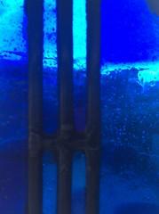 Blue Mackintosh (that petrol emotion) Tags: street school window glass museum scotland glasgow charles stairwell stained strathclyde rennie crm mackintosh shieldsroad tradeston