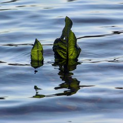Reflection Reflection Leaves Water Reflections Water Water_collection Nature Taking Photos Nature Photography Nature_collection (davidntaylor1968) Tags: reflection nature water leaves takingphotos naturephotography waterreflections watercollection naturecollection