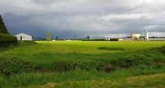 farms of Pitt Meadows under sun and stormy clouds (sergeyangelina) Tags: sky sun rain grey shine farmland
