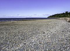 The gulls have it (Tony Tomlin) Tags: stones gulls pointroberts whiterockbc whiterockbeach