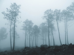 GOT (sandra_laranja) Tags: trees mountain nature fog forest natureza calm got serra wald floresta nevoeiro gameofthrones