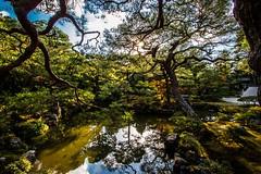Japanese Gardens in Kyoto, Japan (haileyethan1) Tags: gardens japanese tokyo kyoto feeding deer ryokan osaka gion nara dotonbori