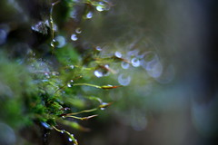 Moss World (ursulamller900) Tags: macro moss moos morningdew extensiontubes