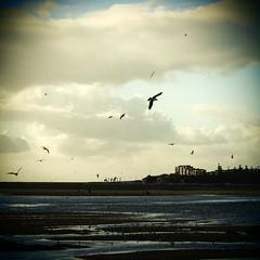 073.2016 (Francisco (PortoPortugal)) Tags: sky seagulls portugal gaivotas cu porto riodouro fozdodouro franciscooliveira portografiaassociaofotogrficadoporto 0732016 20160305fpbo2552
