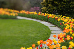 1watermark (Brian M Hale) Tags: flowers tower lensbaby garden ma botanical tulips path massachusetts brian hill walkway edge botanic mass 80 hale boylston brianhalephoto