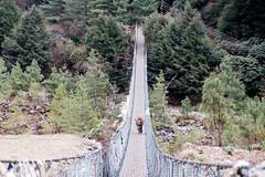 Crossing a Bridge (Mild Delirium) Tags: bridge nepal yak naturaleza mountains primavera nature animals forest puente spring outdoor overcast nublado np montaas   sagarmatha     easternregion fujinonxf1655mmf28rlmwr xf1655mm fujifilmxt10