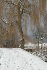 Endlich Schnee! 2 (mellane.karin) Tags: winter snow tree weide bume baum ammertal