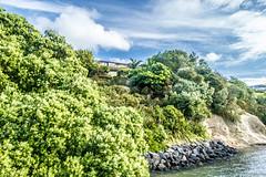living with nature (samir rafsan) Tags: blue sea newzealand sky tree green beach nature clouds landscape nikon image auckland nz lightroom astounding d3200