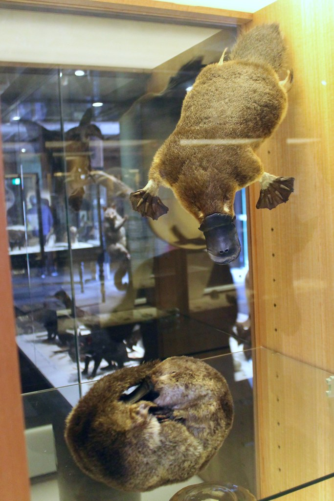 The World's Best Photos of museum and platypus - Flickr Hive