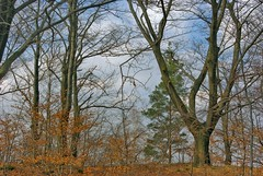 Czteroramienny (Hejma (+/- 4500 faves and 1,4 milion views)) Tags: trees red green clouds outside poland polska shade zielony wiato czerwony chmury drzewa skalnepodoe bkowiec onrockbase cielight