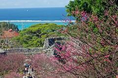 Sakura and Coral reef (tez-guitar) Tags: ocean sea beach coral cherry pentax blossoms bloom cherryblossom sakura reef pentaxart