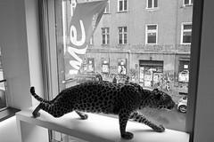 Wild city (elisachris) Tags: street wild urban blackandwhite berlin animal dark mitte ricohgr tier schwarzweis