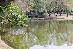 BM7Q4285.jpg (Idiot frog) Tags: park lake building tree water leaf outdoor bade lakeside taoyuan ecosystem