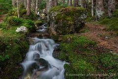 Wildnis (b.stanni) Tags: mountains green nature water stone forest landscape wasser outdoor natur berge grün landschaft wald stein wandern bachlauf