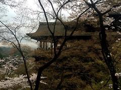 Kiyomizu-dera (mariajml) Tags: travel flowers sea flores love primavera water japan temple agua kyoto paz paisaje greece sakura cherryblossoms kiyomizudera naturalize