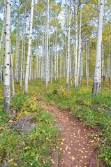 PATH TO GLORY (smittyguy) Tags: autumn trees path changingcolor coloradoautumn