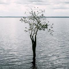 Loneliness (Amorestfutui) Tags: brazil tree planta water rio gua brasil square photography fotografia rvore amaznia waterscapes amaznia aoarlivre squarephotography semefeitos noefects