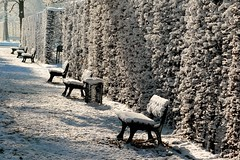 Polsterbank (frodul) Tags: park schnee winter deutschland bank hannover kalt gegenlicht sonnenschein parkbank niedersachsen herrenhausen hecke herrenhusergarten grosergarten