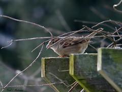 "Scoping Out the Birdfeeder (""Just an ol' nature boy takin' a picture"") Tags: winter bird animal river trumpet vine arbor fujifilm birch honeysuckle pergola xs1"