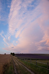 Track alongside lavender field, Cadwell Farm (Graeme Terry) Tags: flowers england plants fence buildings landscape landscapes twilight unitedkingdom farm lavender cloudscape hertfordshire hitchin ickleford