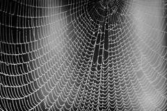 The Original Web (ROPhoto77) Tags: blackandwhite bw abstract wet monochrome lines pattern bokeh outdoor web maine spiderweb balckandwhite dew moisture ronnorenstein